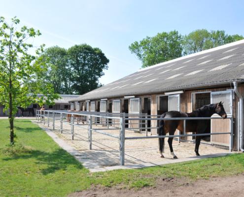 Boxen mit angrenzenden befestigten Paddocks auf dem Gut Schäferhof, drei Pferde befinden sich auf den Paddocks.