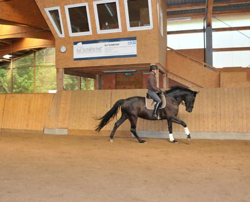 Ein Reiter galoppiert in der Reithalle auf seinem Pferd