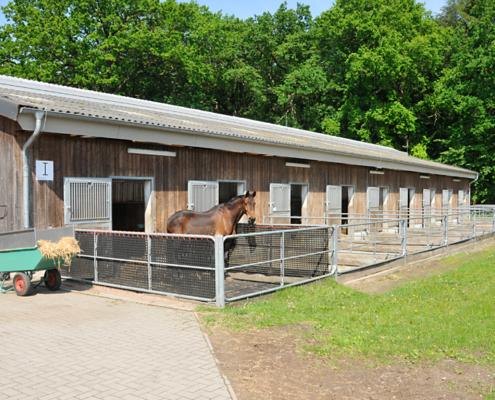 Stall mit Paddock und einem Pferd