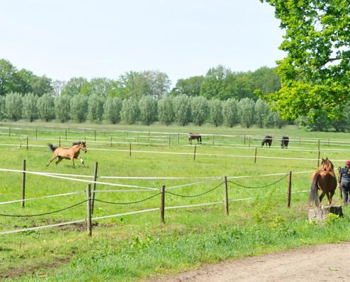 Weideflächen hinter dem Schäferhof mit Pferden